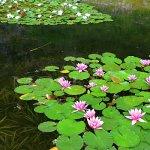 Štramberk - botanická zahrada