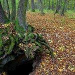 vstup do podzemních štol pod kořeny stromu