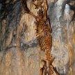 Sloupsko - šošůvské jeskyně