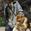 Drzá opice, která utekla a krade svačiny, Praha