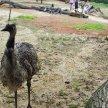 Na návštěvě u emu, Lešná - Zlín