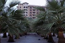 Moskyt v Dubaji