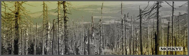 Zachraňte jizerské lesy
