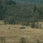 údolí Nemanického potoka