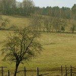 Lučina, Grafenried