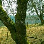 Pila, Seeg - ovocné stromy