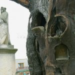 Svatováclavský dub