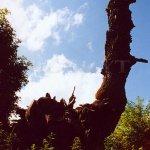 pokroucené torzo třešně u hřbitovní zdi