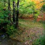 Valenčův důl - Lomský potok