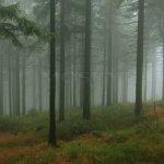 Les u Příchovic