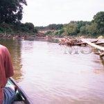 Proplouvání neregulovanou částí Moravy