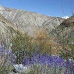 Markha valley trek – rostliny