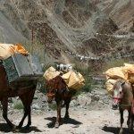 Markha valley trek – koně jako jediný dopravní prostředek