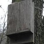 Budka pro netopýry